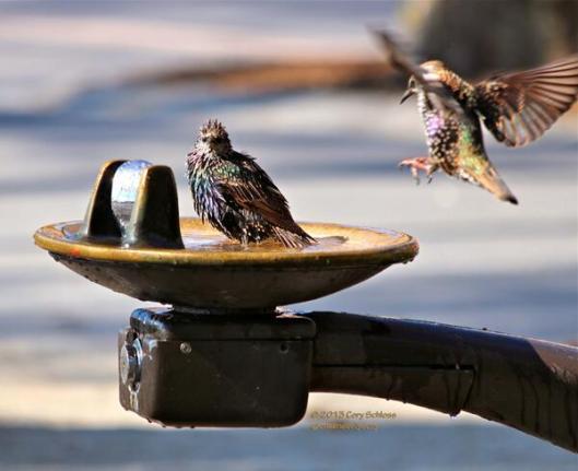 Bird Bath by Cory Schloss