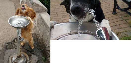 Dogs drinking from water fountain