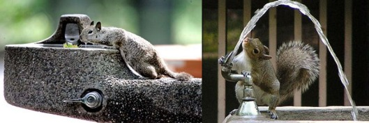 squirrels drinking from water fountain
